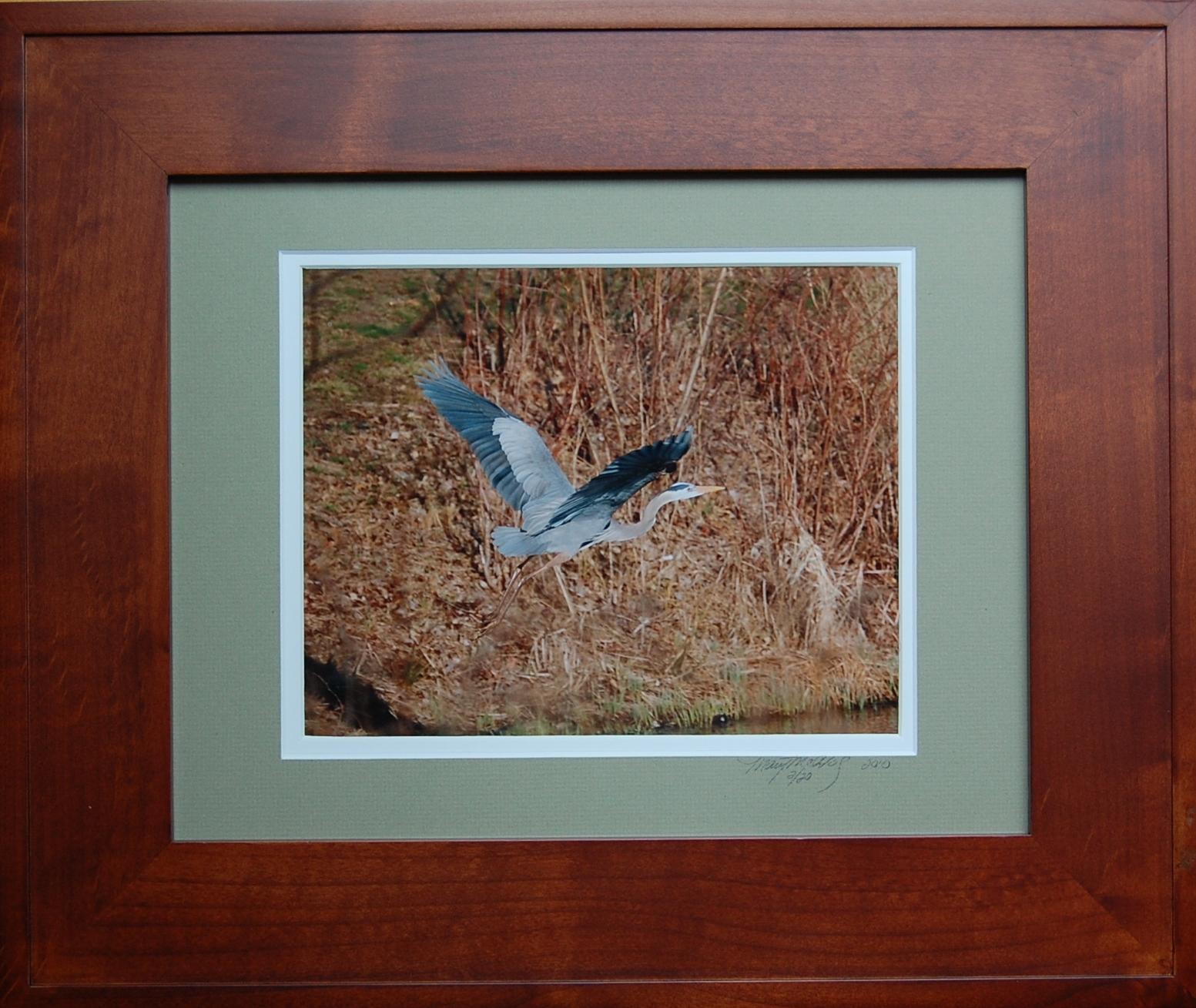 great blue heron 125