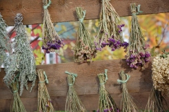 hanging flowers for drying