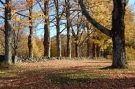 row of trees in fall foliage