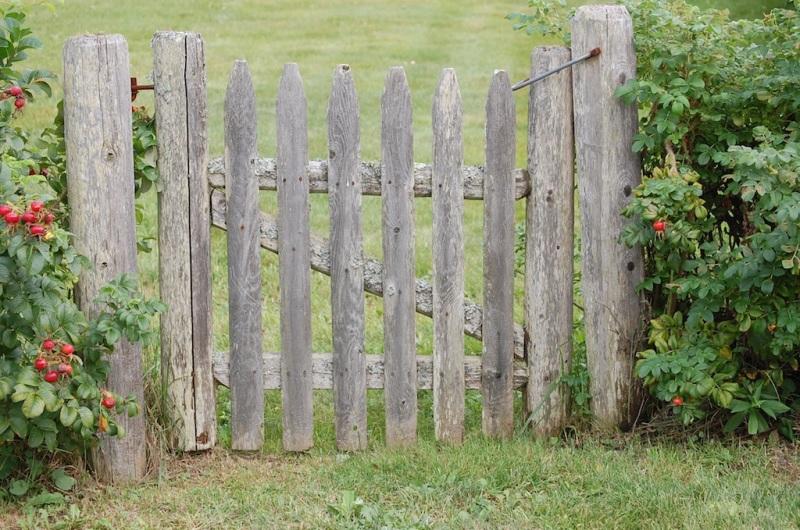 Gate in Rose Hedge