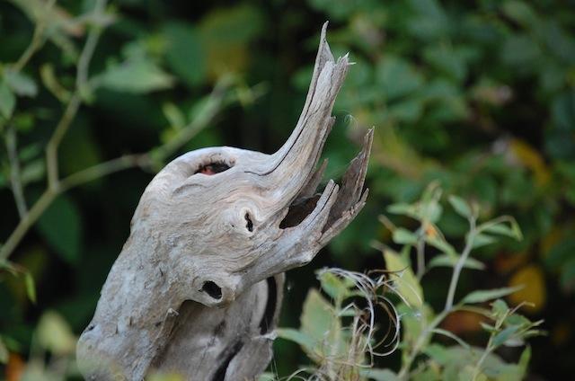 playful baby elephant driftwood