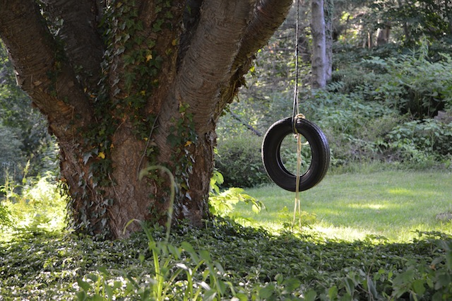 tire swing hanging from large tree