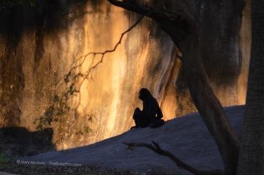 spider-monkey-sunset-lighting-mary-mcavoy